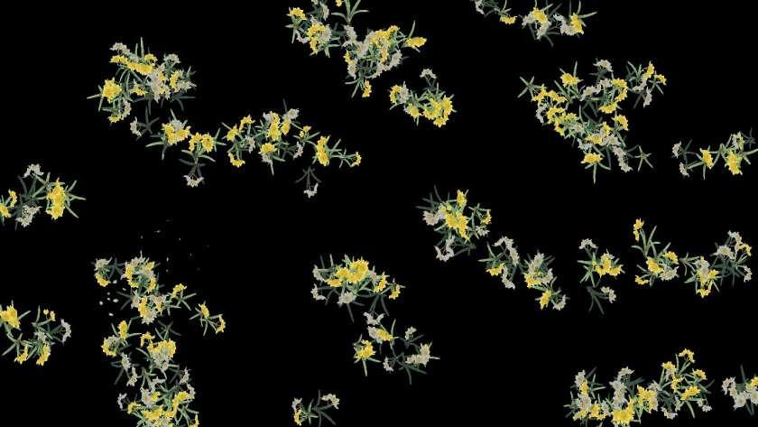 PerlinNoise を使って咲かせた花
